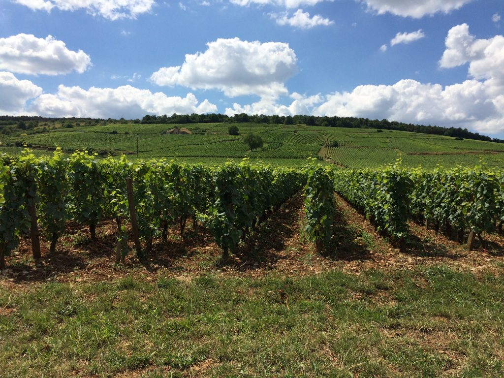 Domaine Amiot Servelle, Chambolle-Musigny